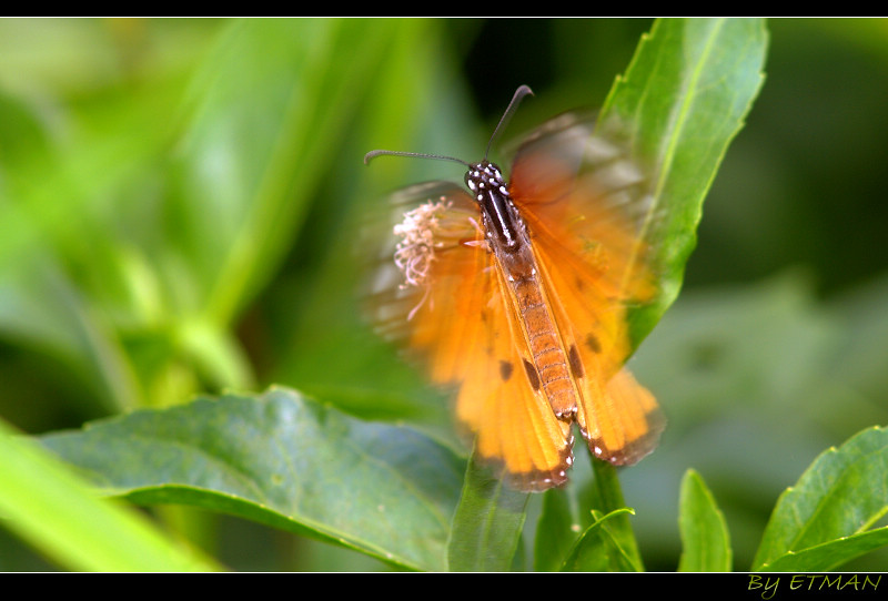 生態溪 輕鬆拍 (泰山)