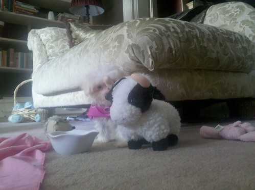 Lily with the Cow