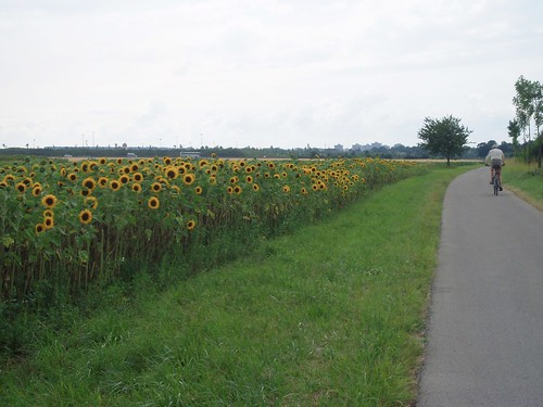 sunflower biking