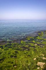 100531-krh-0049 (katreena!) Tags: sea seascape green water rock horizon shore algae