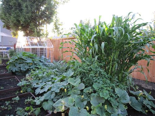 garden update 08-18-2010 007