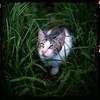 (19/77) Tags: slr film cat malaysia 1977 negativescan kiev88 mediumfromat kodakektacolorpro160 autaut canoscan8800f arsat80mmf28 thecatwhoturnedonandoff myasin
