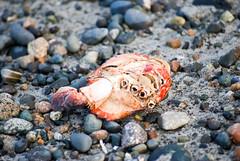 Dead Crab #1