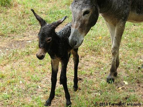 Esmeralda's Baby Boy 12