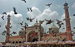 Freedom of Saying Prayer (Taste_of_Cherry) Tags: india freedom fly peace delhi islam prayer central mosque ramadan masjid lal jame namaz peagon jumma