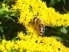 api in quantità