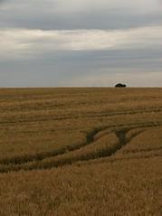 rgen_39 (Torben*) Tags: landscape grain balticsea panasonic rgen ostsee fz50 getreide grainfield getreidefeld kaparkona rawtherapee putgarten