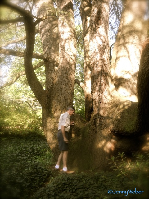 TG inspects a cedar trunk