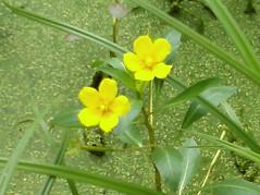 2010-08-23_02namethatflower