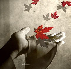 I feel like .. I am the fall .. (mhd.hamwi) Tags: autumn red fall leaves leaf waiting loneliness hand isolation expectation thedantecircle mhdhamwi mohammadhamwi