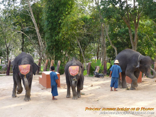 Elephant trekking & Safari 29