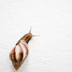 115 | 365 [My Project 365 Very Slow...] (tontygammy) Tags: white wall snail minimal simplicity simply slowly simple gastropod colorimage project365 365days grd3 grdiii ricohgrdigitaliii