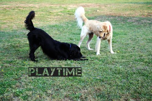 *Playtime*