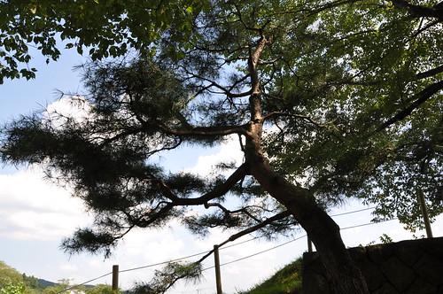 Sirakawa-Komine-jo_040