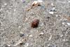 conchiglia (Lù *) Tags: mare estate spirale sabbia conchiglia