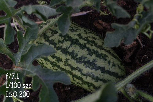 M-watermelon-2