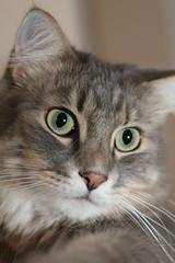 Go (eric s67) Tags: cats cat chats katten kat chat gatos gato katze geo gatto katzen gatti