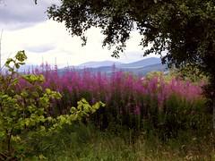 A scottish scene (Eye4itleverick) Tags: mountains scotland scenery eye4itleverick