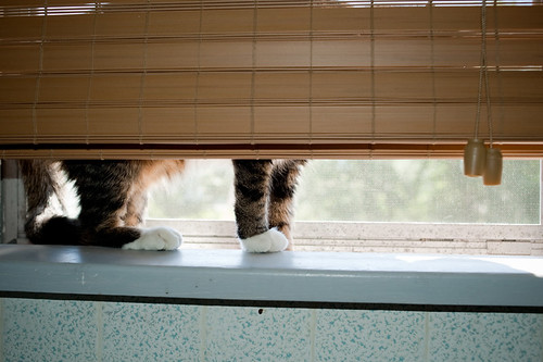 window paws