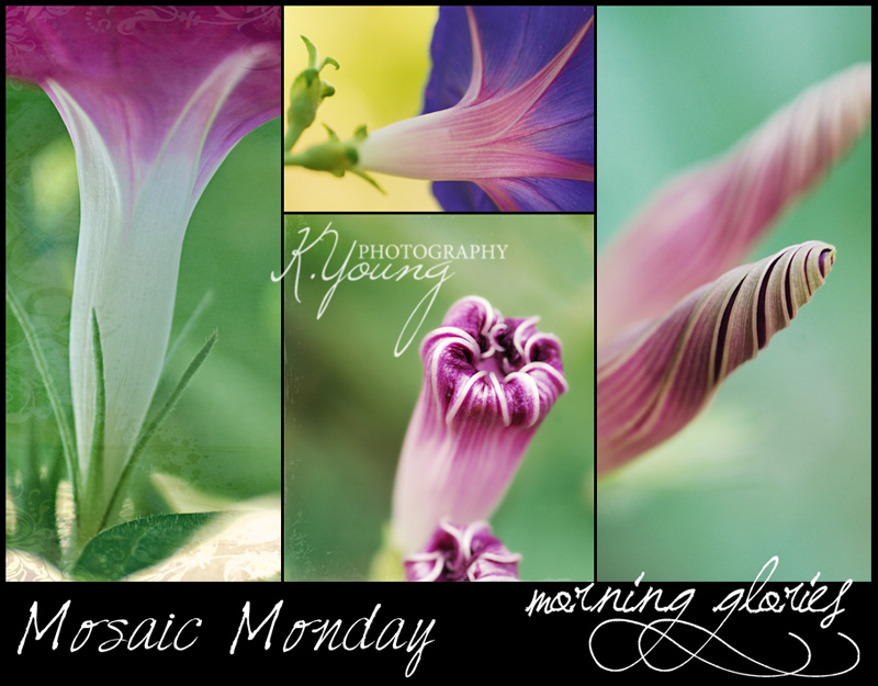 Mosaic Monday: Morning Glories