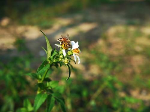 蜂來了!!