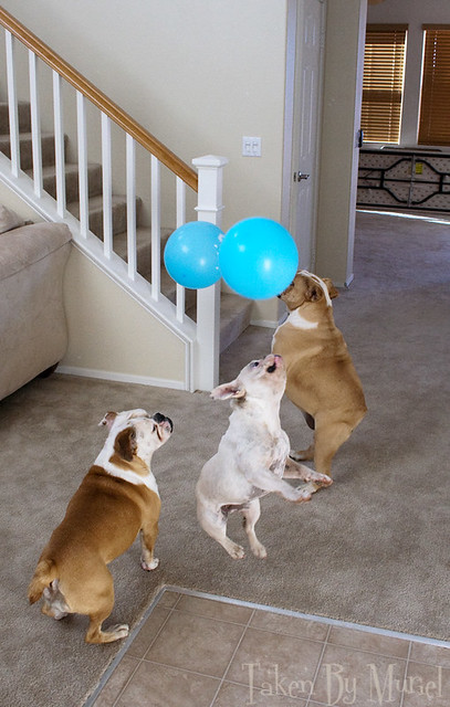 dogs balloon2