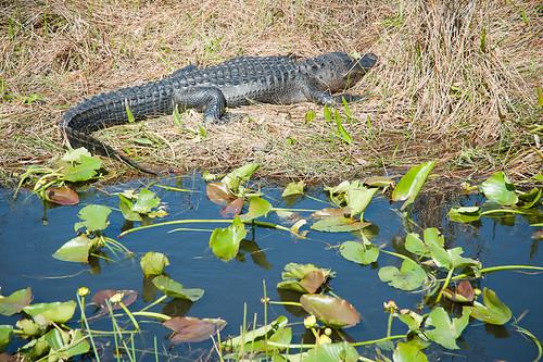 Everglades-28