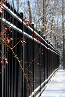 Fence in snow with berries