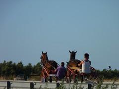Saline&Calesse (Francesco Orlando (Tratto86)) Tags: horses italy animal lago mare estate carriage gare sale natura di pepe saline cavalli cavallo margherita savoia apulia stagno calesse trinitapoli