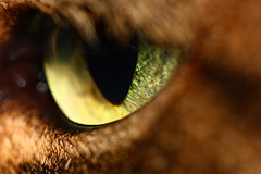 Occhio di gatta reloaded - Cat's eye reloaded (Strlicfurln) Tags: macro eye cat gatto occhio canonef100mmmacrof28usm flickraward mygearandme mygearandmepremium