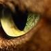 Occhio di gatta reloaded - Cat's eye reloaded