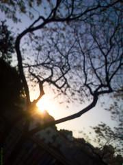 In Between (Vitor Chiarello) Tags: sky sun sol silhouette kodak céu motorala zn5 yourphototips