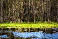 Pond (rickhanger) Tags: nature landscape pond trees reflections canaanvalley westvirginia