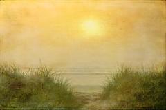 Summer Morning (Bud in Wells, Maine) Tags: wellsbeach fog newengland coast texture hss lenabemannaj dunegrass beachgrass seagrass