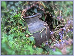 3247 v1 Urn in the overgrowth (Andy - Busyyyyyyyyy) Tags: ooo overgrown picasaborder rockery rrr urn uuu