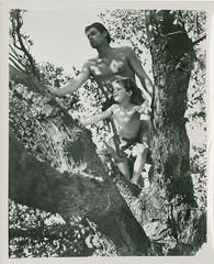 7000-2068 (AliceJapan ʕ •ᴥ•ʔ) Tags: johnny mgm 1939 weissmuller johnnyweissmuller tarzanfindsason