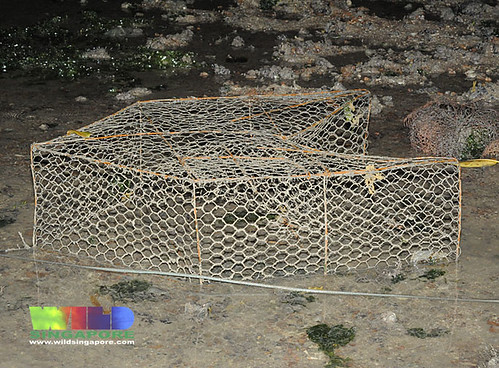 Fish trap found on Beting Bronok