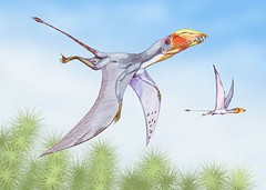 Dimitry Bogdanov - Dimorphodon (Wikipedia)