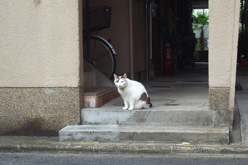 Today's Cat@2010-07-03