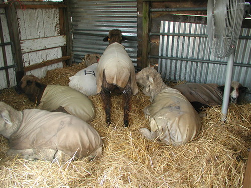 Stable-Grid Installation: The Blair Sheep Project