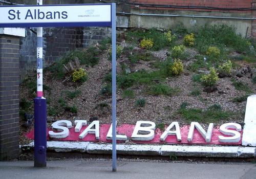 stalbanscitystn-flowerbed