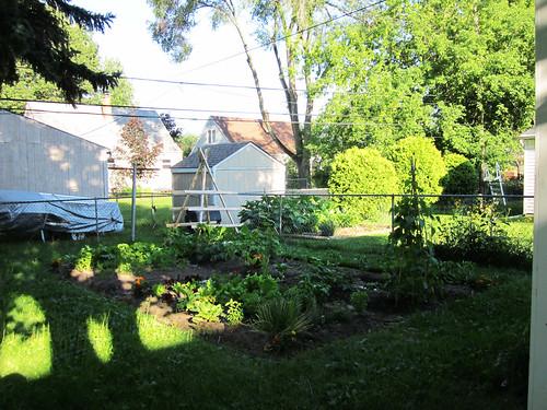 2010 Garden: Week 6
