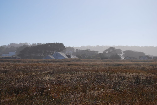 Mendocino Morning Mist