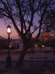 La farola encendida (Asun....) Tags: pink light luz bench atardecer farola darkness banco catedral rosa bodega oscuridad jerezdelafrontera romanticnight nocheromántica pinkmode ladonnabupu