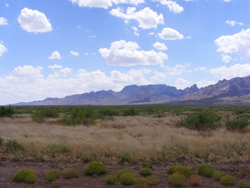Picture of the Southern Organ Mountains