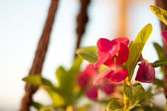 Morning sunshine 223/365 (lois khalafalla) Tags: morning light flower sunshine