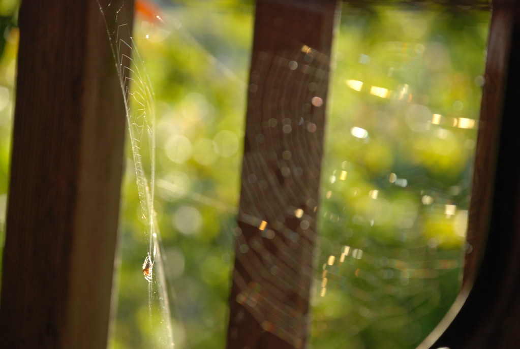 spider webs in every direction