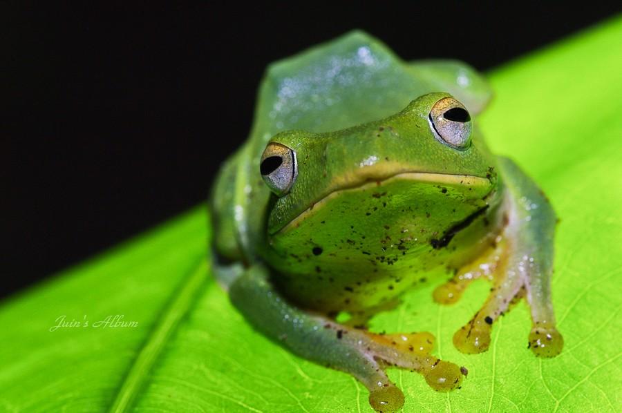 """"""" 蛙 """""""