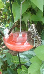 Mmmmm...lunchtime at the Butterfly House!