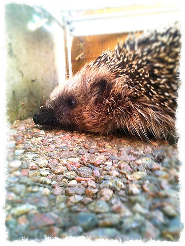 hedgehog 2010